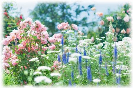 様々な草花咲く庭