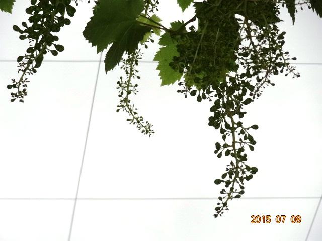 032_2015070918082027b.jpg