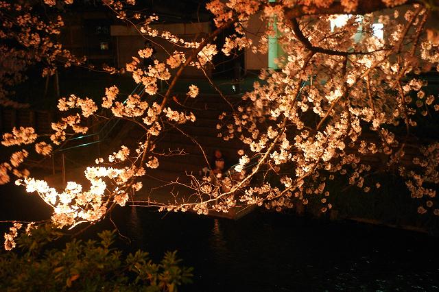 M-Rokkor28mmと川越誉桜