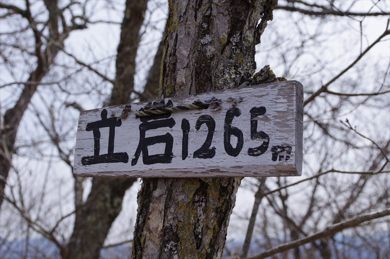 IMGP4363_R.jpg