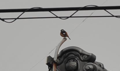 bird2015129.jpg