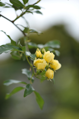 kimokkou2015420-3.jpg