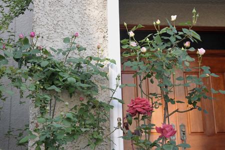 roses2015502-1.jpg