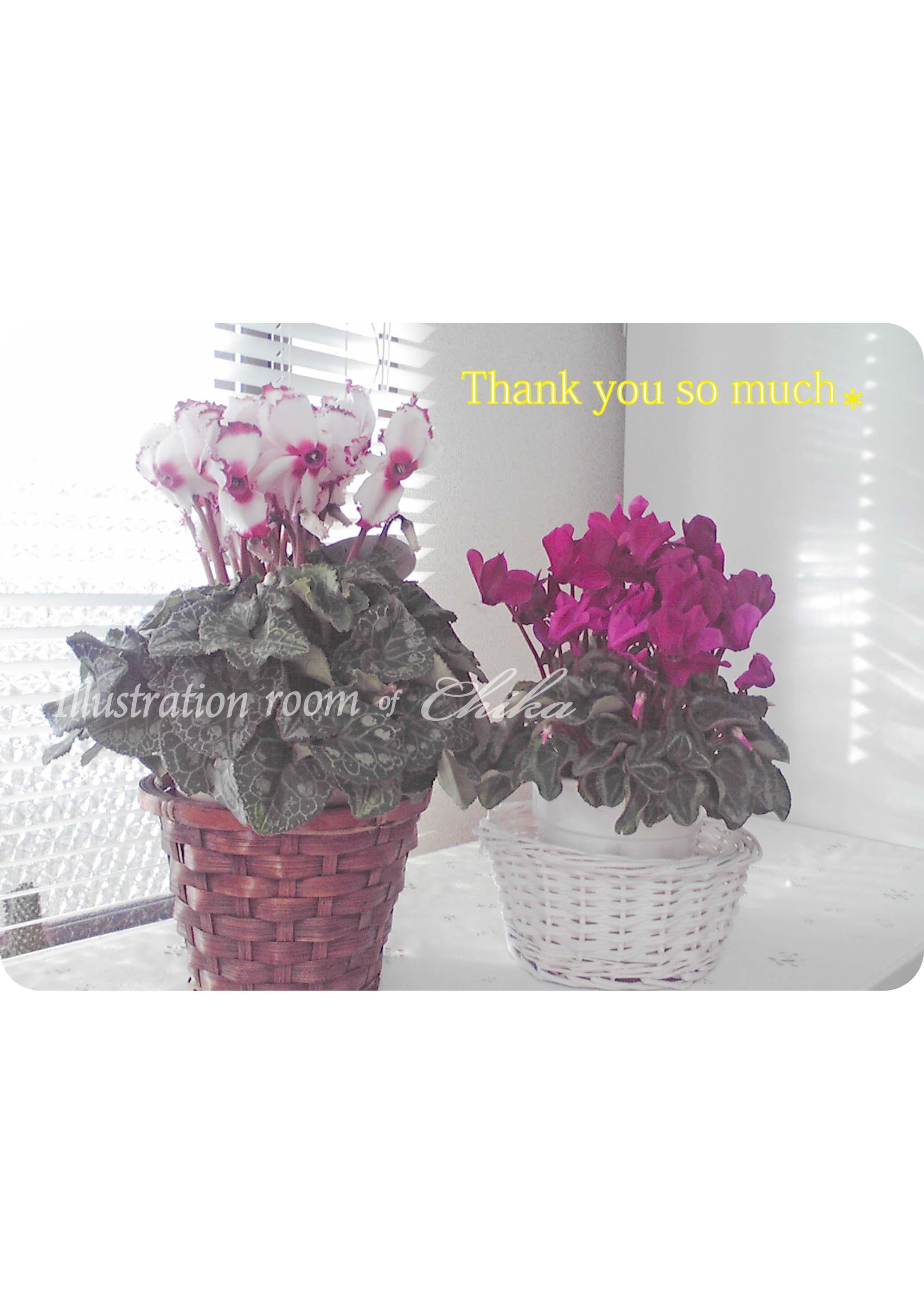 窓辺の花 ブログ用