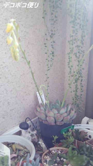20150321 花がいっぱい5