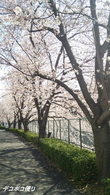 20150403 桜1