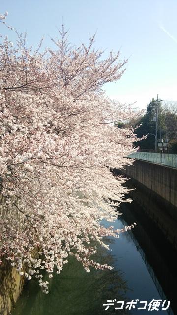 20150403 桜6