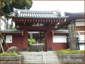 20150621  山門   バッサリ木のお寺