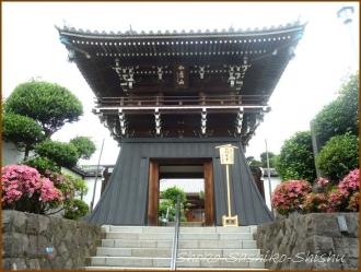 20150621  鐘楼堂 1  バッサリ木のお寺