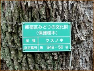 20150621  木 4  バッサリ木のお寺