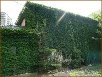 20150628  家 2の4  緑の館