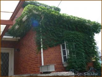 20150628  家 2の5  緑の館