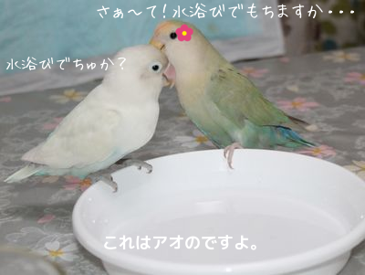 レーヌの水浴び