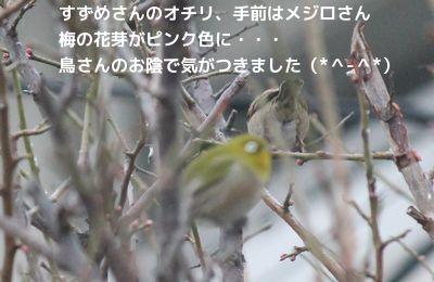 ありがとう鳥さんたち