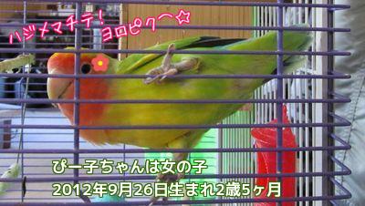 ぴー子ちゃん2