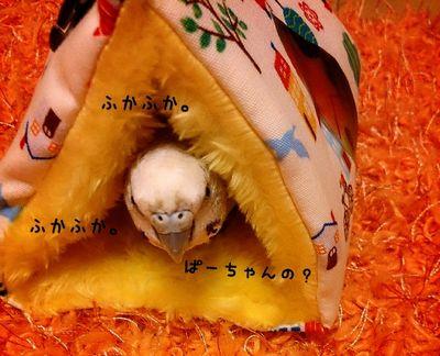 パールちゃんのテント