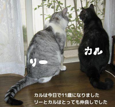 リーとカル2
