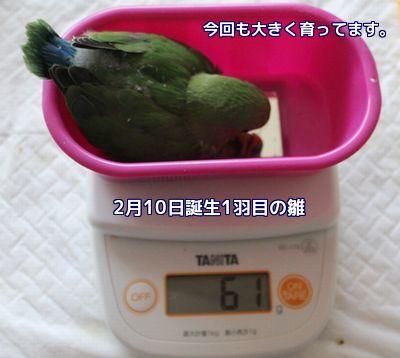 体重測定1羽目