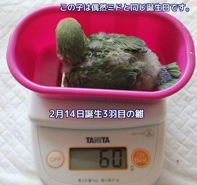 体重測定3羽目