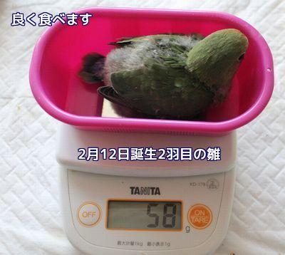 体重測定2羽目