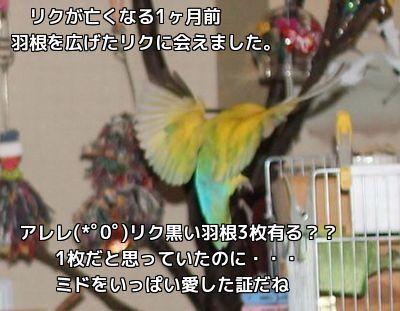 リクの羽根(゜ロ゜)ギョェ