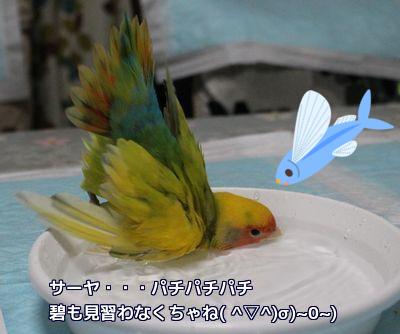 サーヤの水浴び