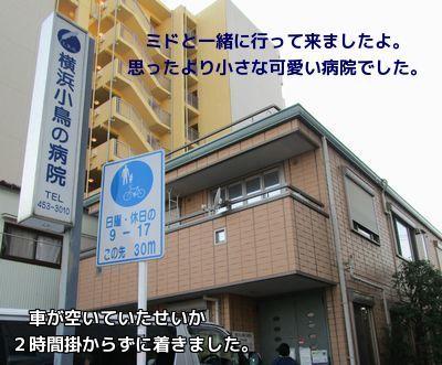 横浜小鳥の病院