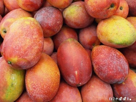 台湾夏のフルーツ3