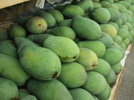 台湾夏のフルーツ6