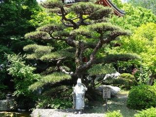 6安楽寺-松26