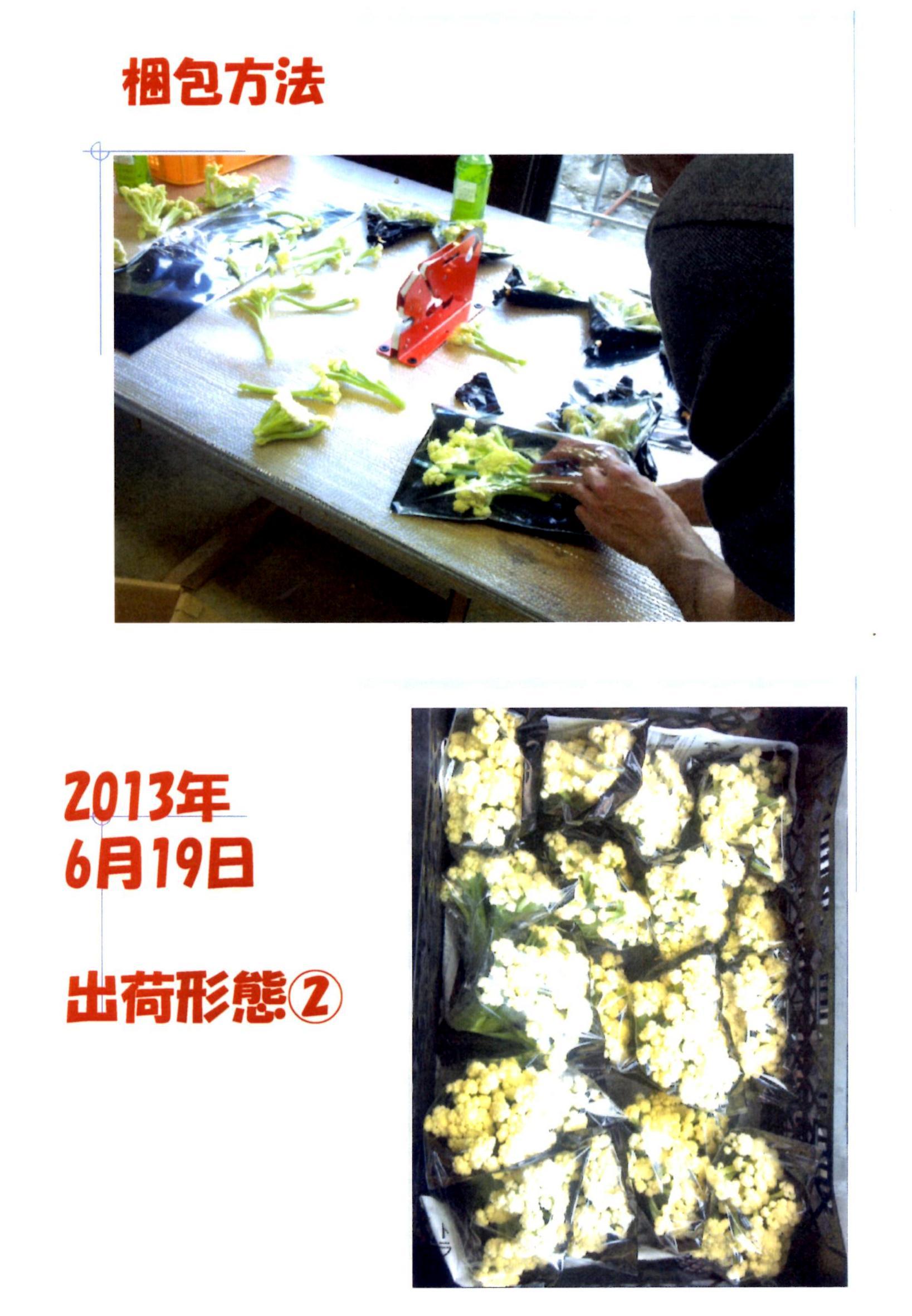 karifu-deta10.jpg