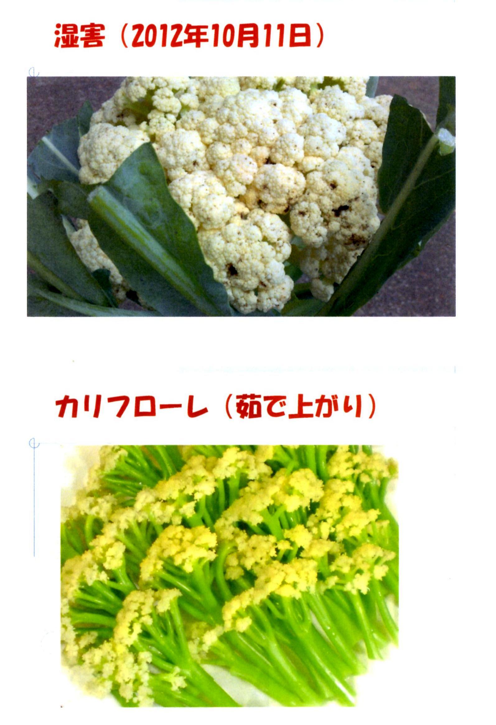 karifu-deta11.jpg
