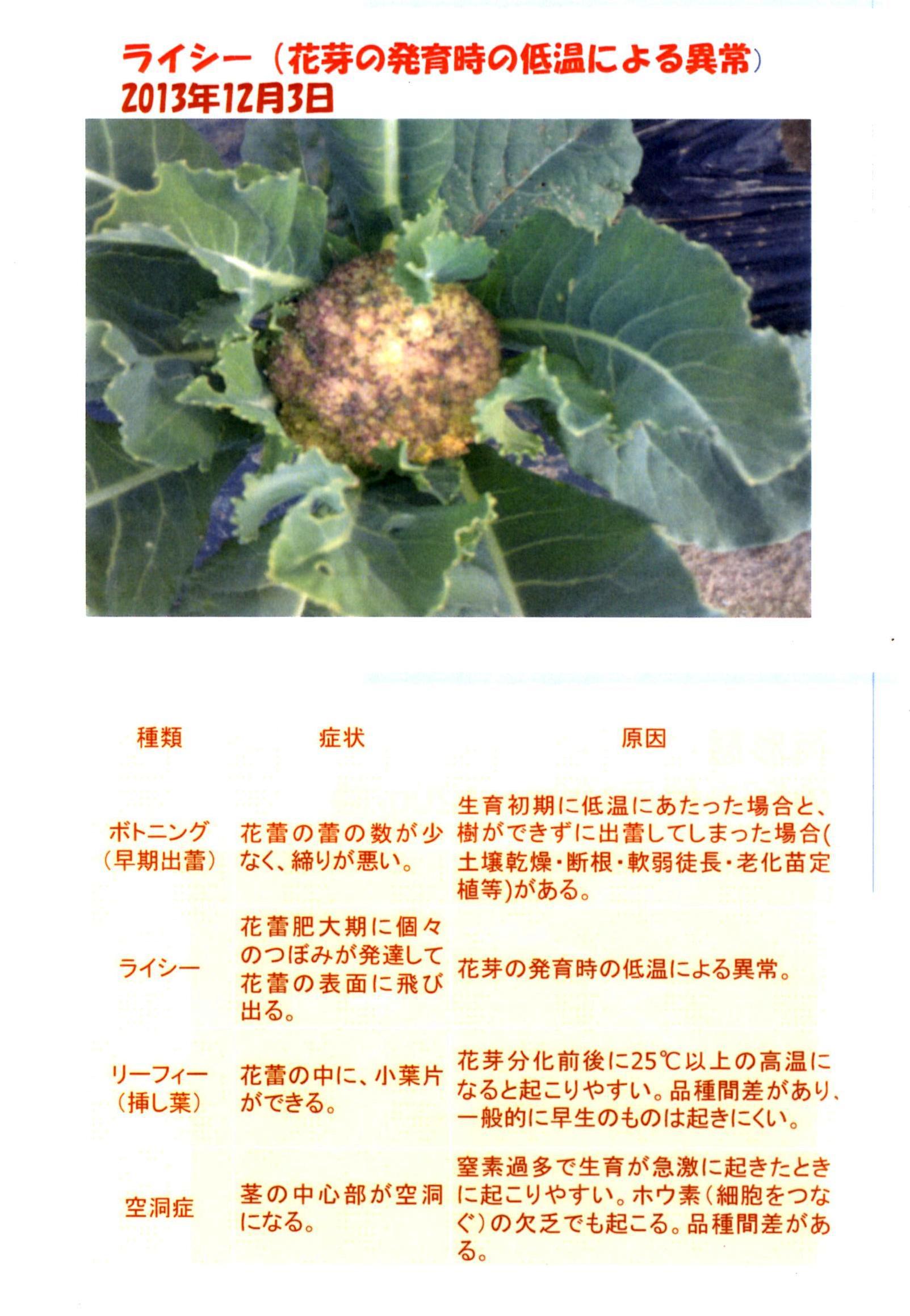 karifu-deta12.jpg
