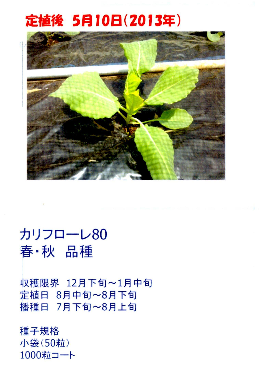 karifu-deta3.jpg