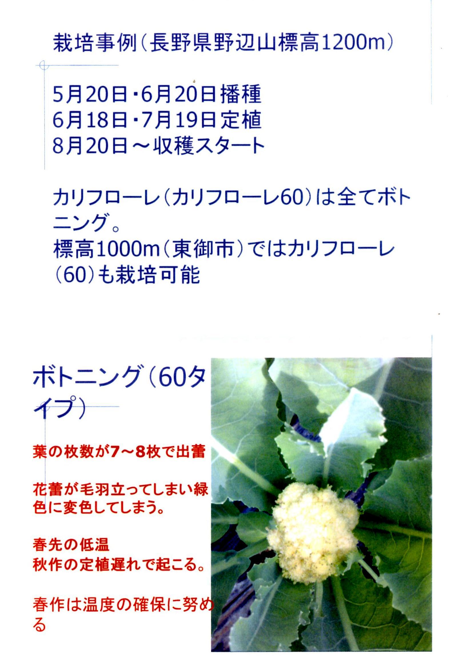 karifu-deta6.jpg