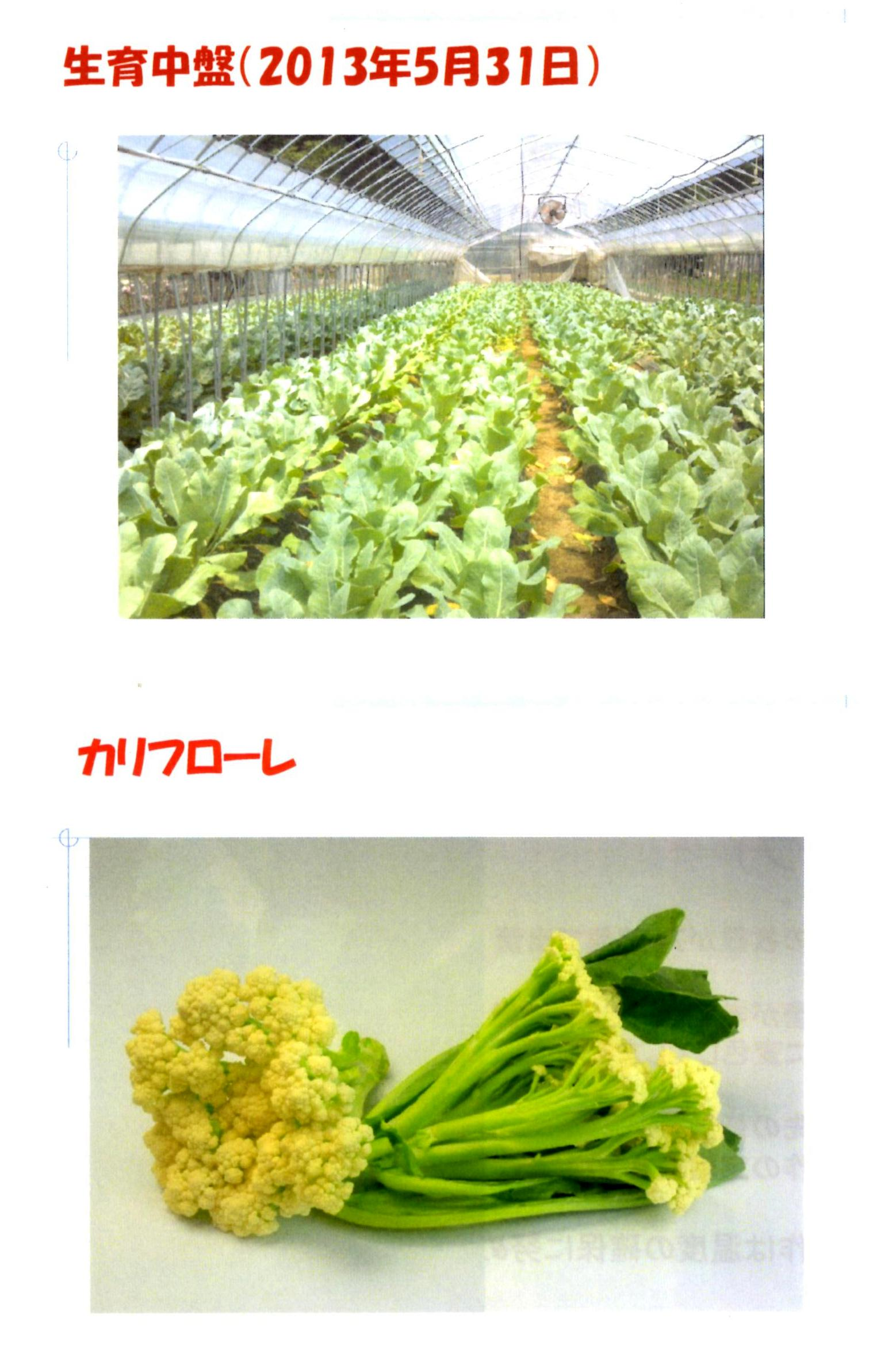 karifu-deta7.jpg