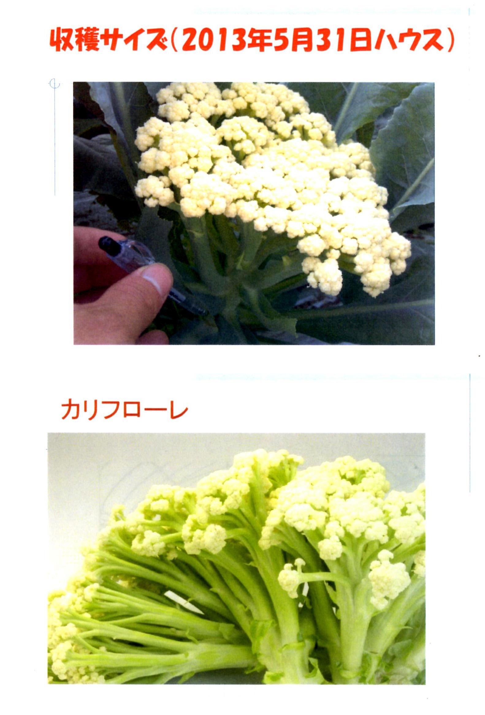 karifu-deta8.jpg