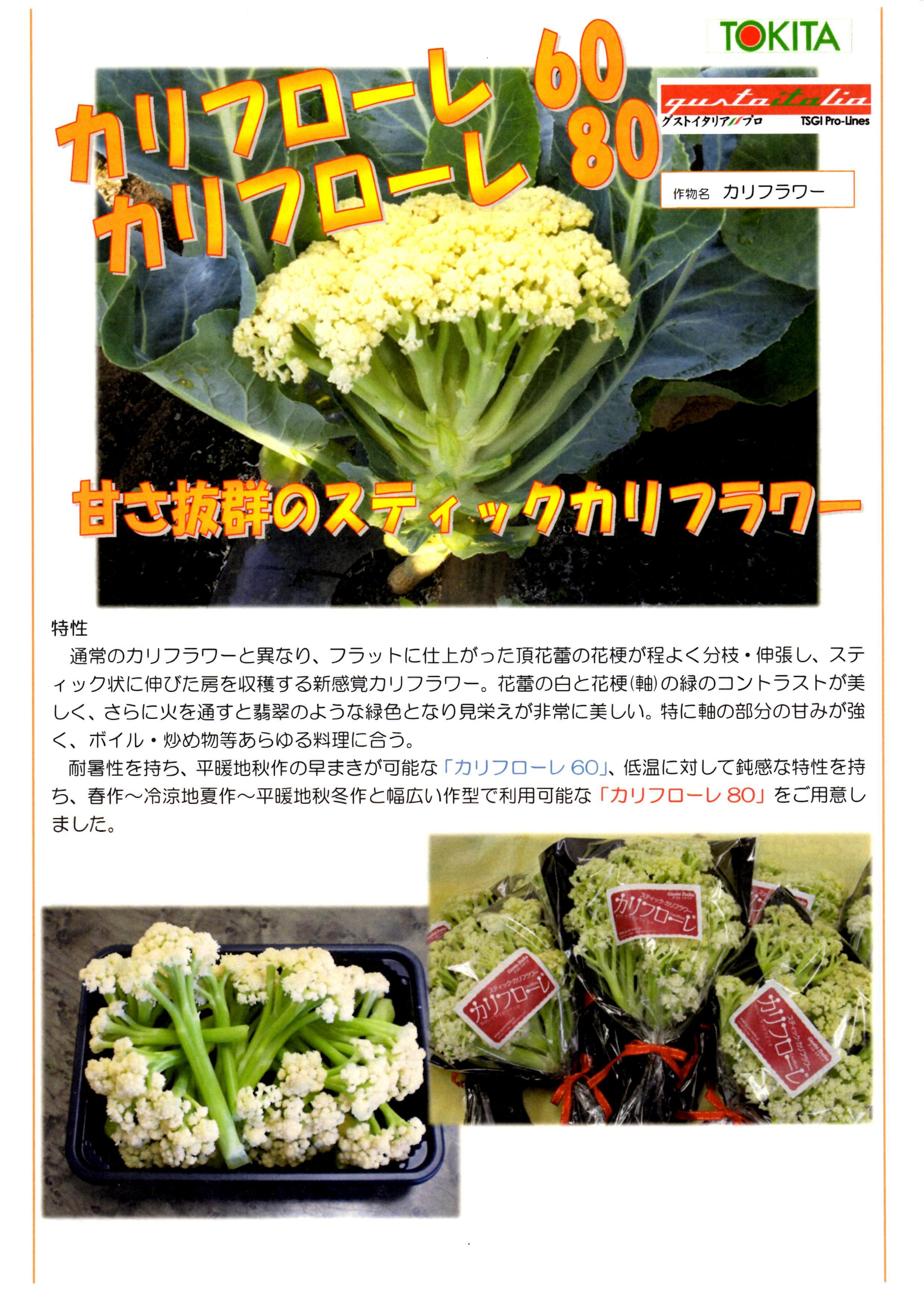 karifu-panf.jpg