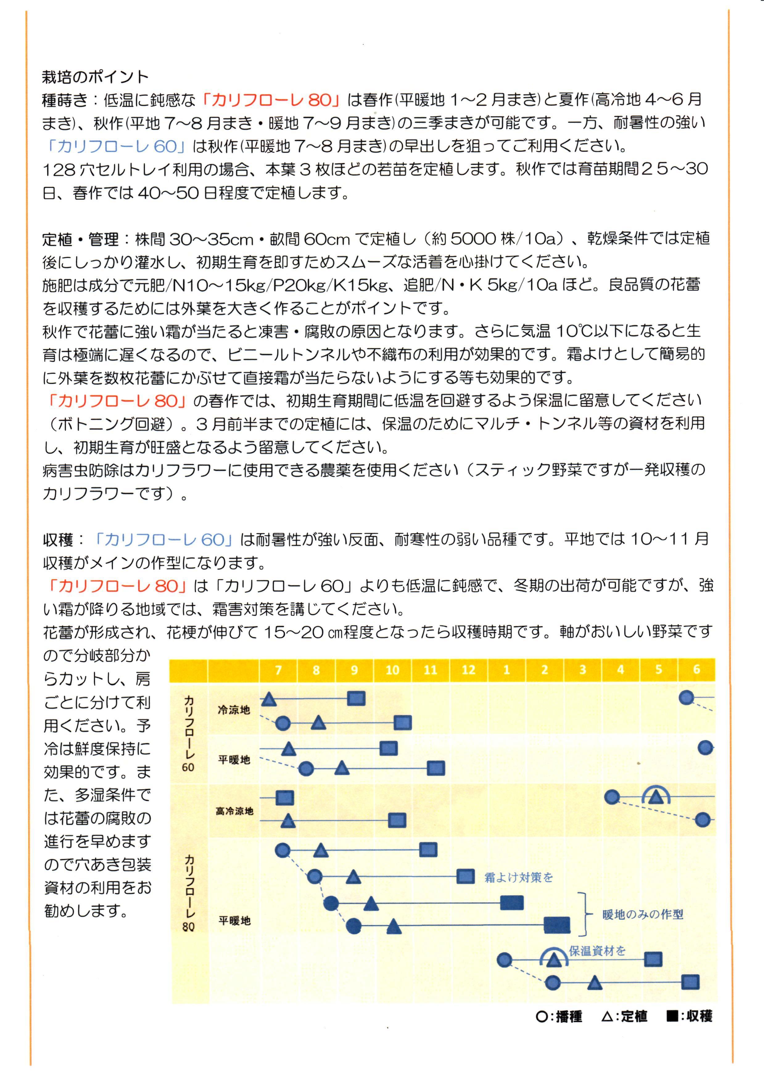 karifu-panf2.jpg