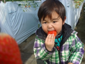 もっとおっきなイチゴたべる