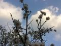 2015年春の梅