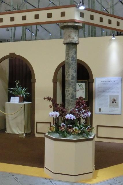 ロスチャイルド家の蘭