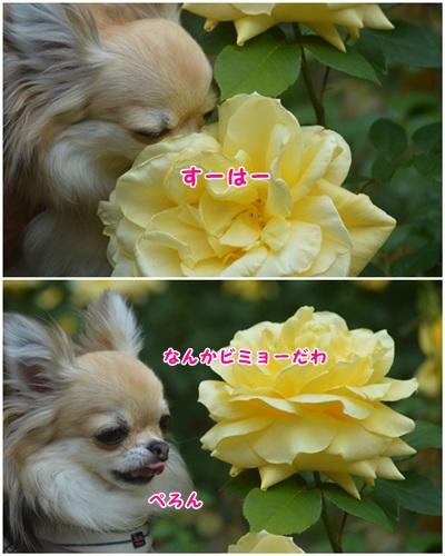薔薇と沙羅