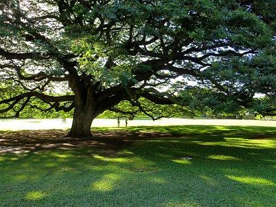 広げた枝葉の影に入るdownsize
