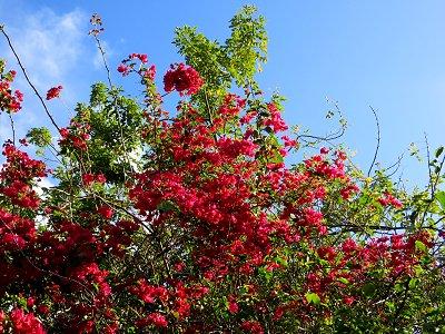 青空に燃える赤い花downsize