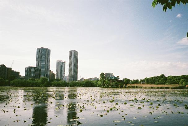 shio_不忍池