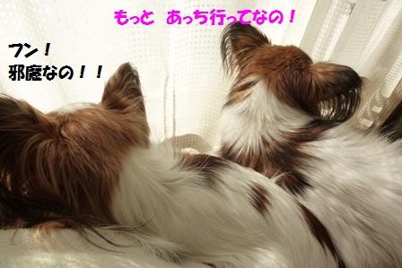 P1310778.jpg