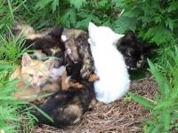 リンちゃんと子猫たち