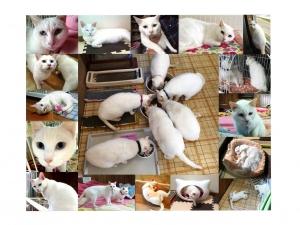白猫豆知識
