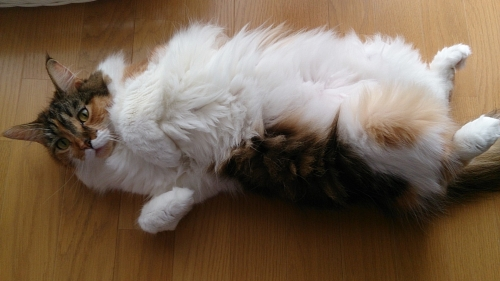 ラッコ寝_小豆猫3